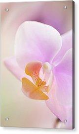 Pastel Pink Phalaenopsis Flower Close-up Acrylic Print by Maria Mosolova
