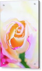 Pastels Acrylic Print