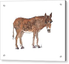 Pasture Boss 2015 Watercolor Painting By Kmcelwaine Acrylic Print