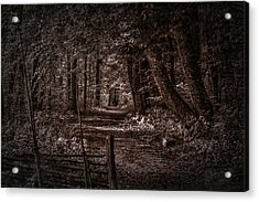 Path In Forest #i0 Acrylic Print