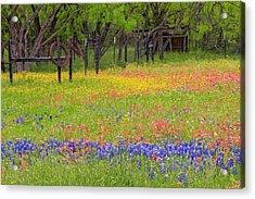 Pattern Of Texas Paintbrush Acrylic Print by Adam Jones