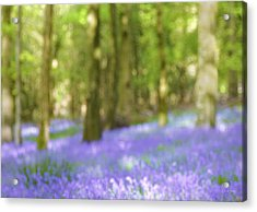 Pause Among The Bluebells Acrylic Print by Norma Slack