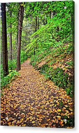 Acrylic Print featuring the photograph Peaceful Autumn Trail At Watkins Glen State Park by Lynn Bauer
