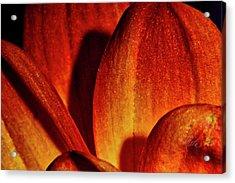Peach Petals Acrylic Print