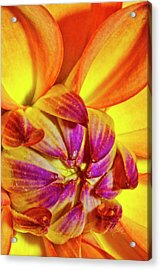 Peach Purple Flower Acrylic Print