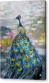 Peacock In Dappled Light Acrylic Print