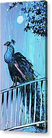 Peacock On A Fence Acrylic Print