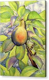 Pear Of Paradise Acrylic Print
