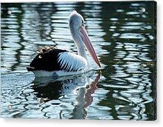 Pelican On The Lake Acrylic Print