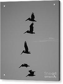 Acrylic Print featuring the photograph Pelican Silhouette  by Jeni Gray