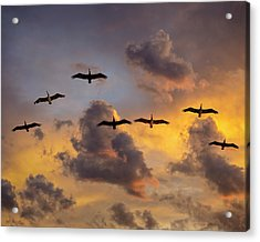 Acrylic Print featuring the photograph Pelicans In The Clouds by John Rodrigues