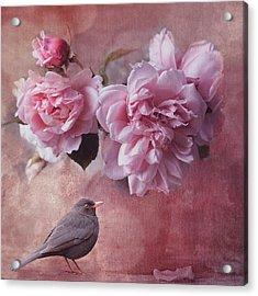 Peonies And Blackbird Acrylic Print