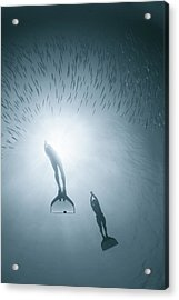 People Diving Deep In Water Acrylic Print by Nature, Underwater And Art Photos. Www.narchuk.com