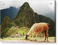 Peru, Machu Pichu Acrylic Print