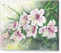 Peruvian Lilies Acrylic Print