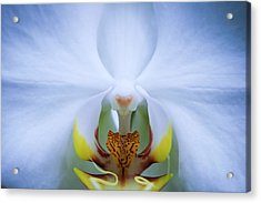 Phalaenopsis Orchid Acrylic Print by By Ken Ilio