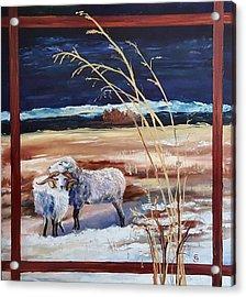 Phil And Alice Navajo Sheep    38 Acrylic Print