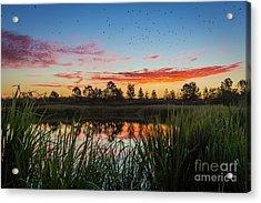 Phinizy Swamp Sunrise - Augusta Ga Acrylic Print