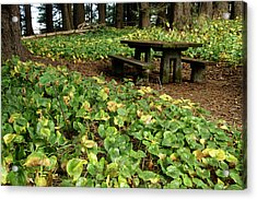 Picnic  Table In The Forest  Acrylic Print