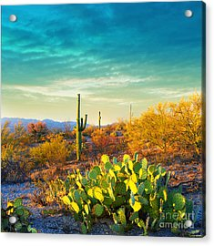 Picturesque, Serene Sunset In Saguaro Acrylic Print