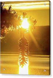 Pine Cone Fire Acrylic Print