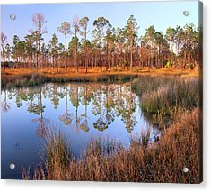 Pines Reflected In Pond Near Piney Acrylic Print by Tim Fitzharris/ Minden Pictures