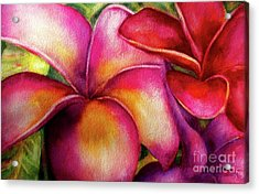 Pink And Red Plumerias Acrylic Print