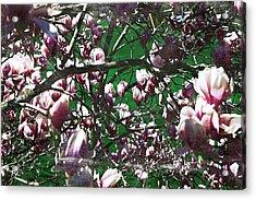 Pink Bush Acrylic Print