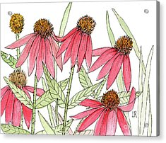 Pink Coneflowers Gather Watercolor Acrylic Print