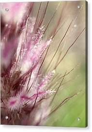 Pink Cotton Candy Acrylic Print