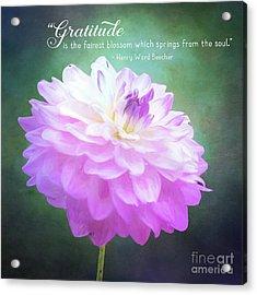 Pink Dahlia Gratitude Artwork Acrylic Print