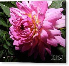 Pink Flower No. 58 Acrylic Print