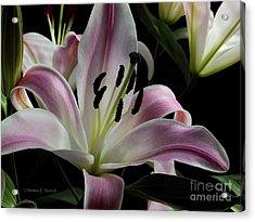 Pink Flowers No. 61 Acrylic Print