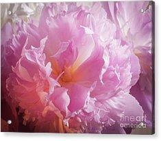 Pink Flowers No. 77 Acrylic Print