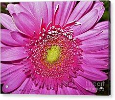 Pink Flowers P4 Acrylic Print
