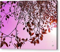 Pink Glow Acrylic Print