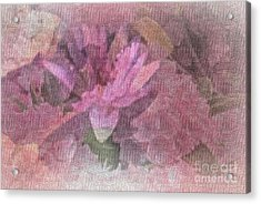 Pink Haze Acrylic Print