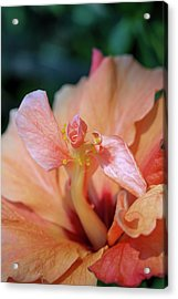 Pink Hibiscus Flower Acrylic Print