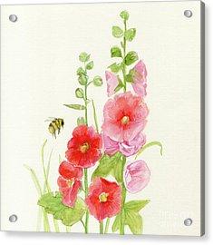 Pink Hollyhock Watercolor Acrylic Print