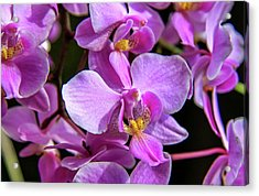 Pink Orchids Acrylic Print