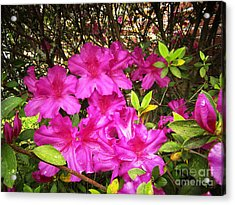 Pink Outside Acrylic Print