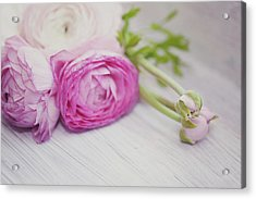 Pink Ranunculus Flowers On White Wooden Acrylic Print