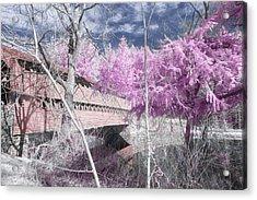 Pink Sachs Acrylic Print