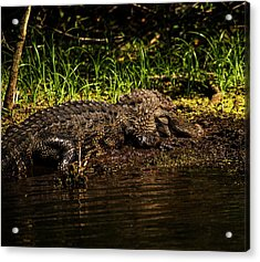 Playing In The Mud Acrylic Print