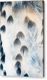 Plumage Background Of Bird Closeup Acrylic Print