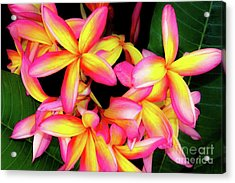 Plumeria Flowers - Tropic Hawaii Acrylic Print by D Davila