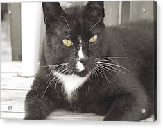 Poes Black Cat Acrylic Print by JAMART Photography