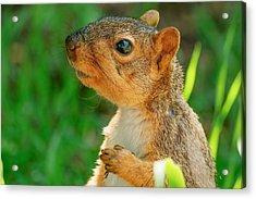 Pondering Squirrel Acrylic Print
