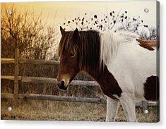 Pony Warm Up Acrylic Print