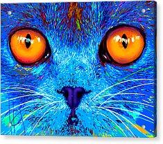 pOpCat Boe - Big Orange Eyes Acrylic Print